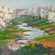 Almond Orchard In Bloom Art Print