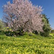 Almond Tree In Meadow Art Print