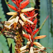 Aloe Bloom Desert Garden Art Print