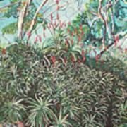 Aloe Garden Vumba Art Print