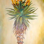 Aloe In The Sunlight Art Print