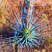 Aloe Vera In Meadow Art Print