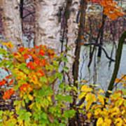 Along The Breezeway In Autumn 2014 Art Print