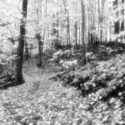 Along The Path Bw  Art Print