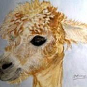 Alpaca Cutie Art Print