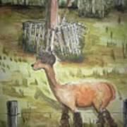 Alpaca Glory Art Print