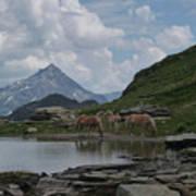 Alps' Horses Art Print