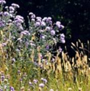 Alpine Thistles And Grasses Art Print