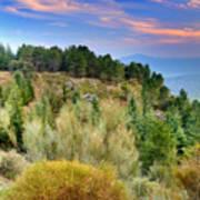 Alpujarras Forest At Sunset Art Print
