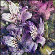 Alstroemeria Art Print