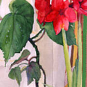 Amaryllis And Begonia Art Print