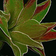 Amaryllis Art Art Print