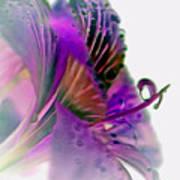 Amaryllis Butterfly II Art Print