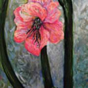 Amaryllis Of Peace Art Print