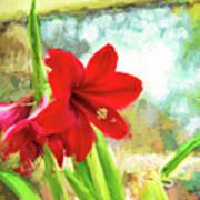 Amaryllis On  The Porch Art Print