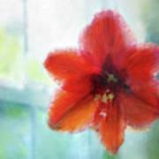 Amaryllis Window Art Print