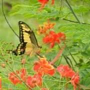 Amazonia Butterfly Art Print
