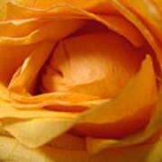 Amber's Rose Art Print