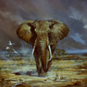 Amboseli Bull Elephant Art Print
