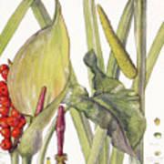 Ambrosia Xii Art Print