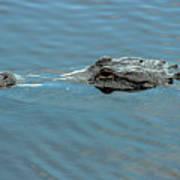 American Alligator Profile Art Print