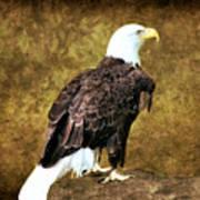 American Bald Eagle Art Print