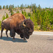 American Bison Sharing The Road In Yellowstone Art Print