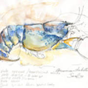 American Blue Lobster Art Print