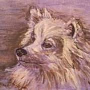 American Eskimo Dog Art Print