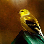 American Gold Finch In Texture Art Print