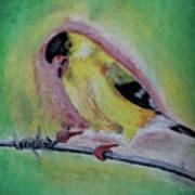 American Gold Finch  Art Print
