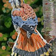 American Kestrel In My Garden Art Print