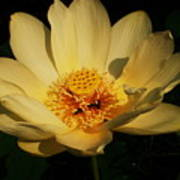 American Lotus Print by Ron Kruger