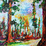 American National Parks Redwood Trees Art Print