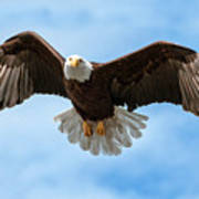 American National Symbol Bald Eagle With Wings Spread Art Print