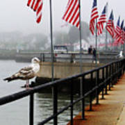 American Seagull Art Print