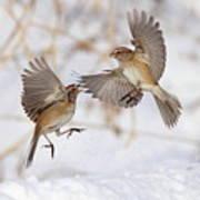 American Tree Sparrows Art Print