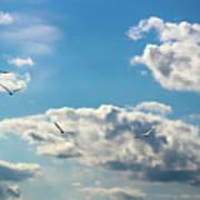American White Pelicans Flying Art Print