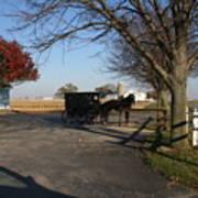 Amish 4 Art Print