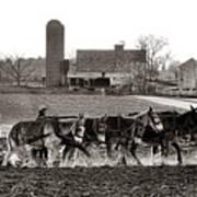 Amish Agriculture  Art Print