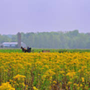 Amish Buggy And Yellow Field Art Print
