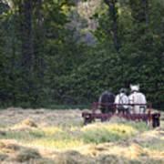 Amish Farmer Raking Hay At Dusk Art Print