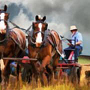 Amish Farmer Art Print by Tom Griffithe