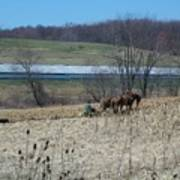 Amish Farming Art Print