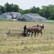 Amish Girl Raking Hay Photo Art Print