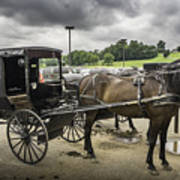 Amish Horse And Buggy Art Print