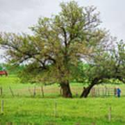 Amish Man And Tree Art Print