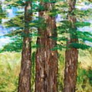 Among The Ferns Art Print
