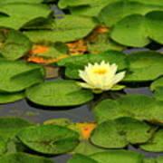 Among The Lily Pads Art Print