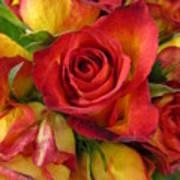 Among The Rose Leaves Art Print